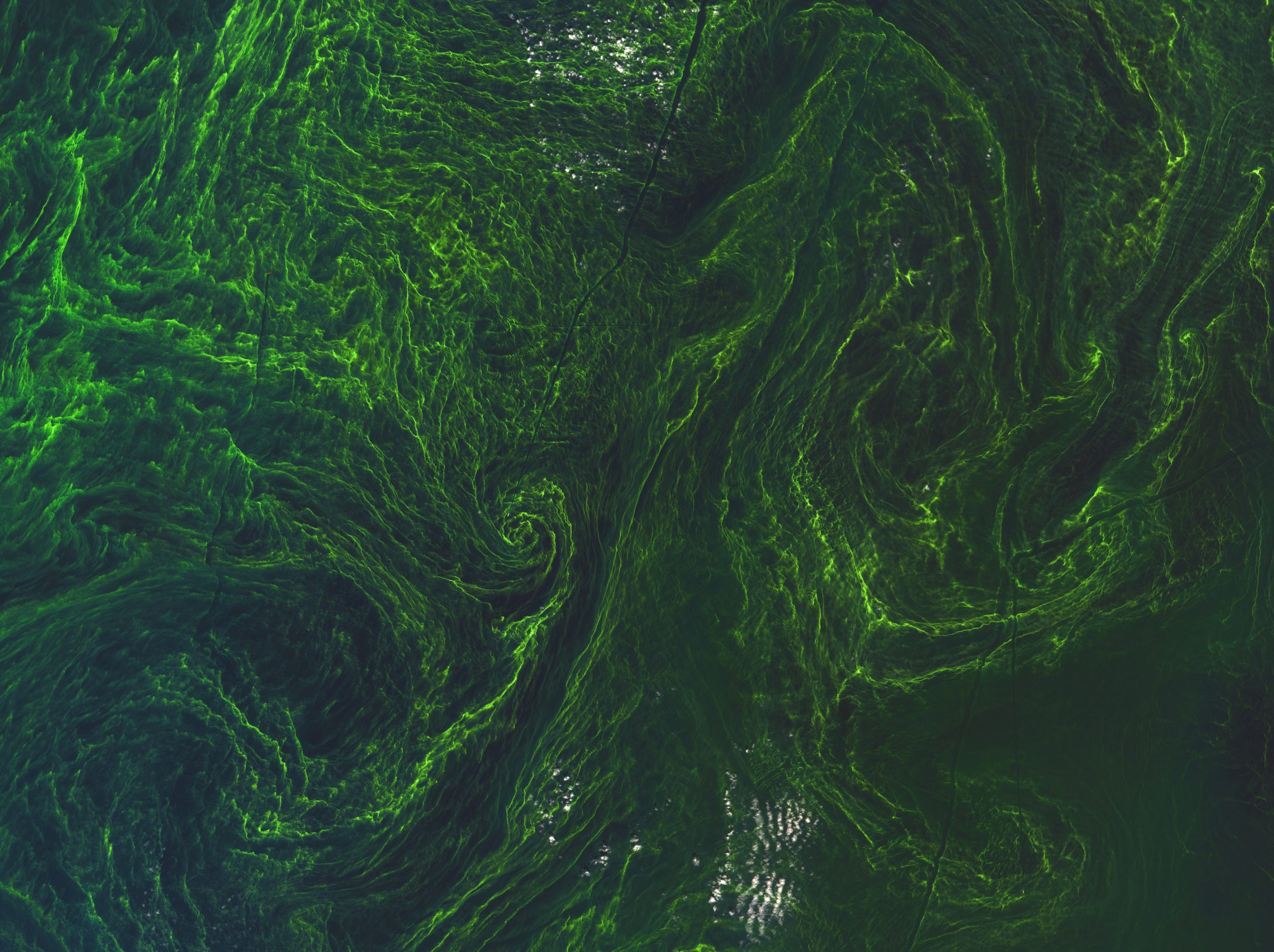 Algae bloom over Baltic Sea - This red–blue–green composite image from Sentinel-2A taken on 7 August 2015 has a spatial resolution of 10 m.