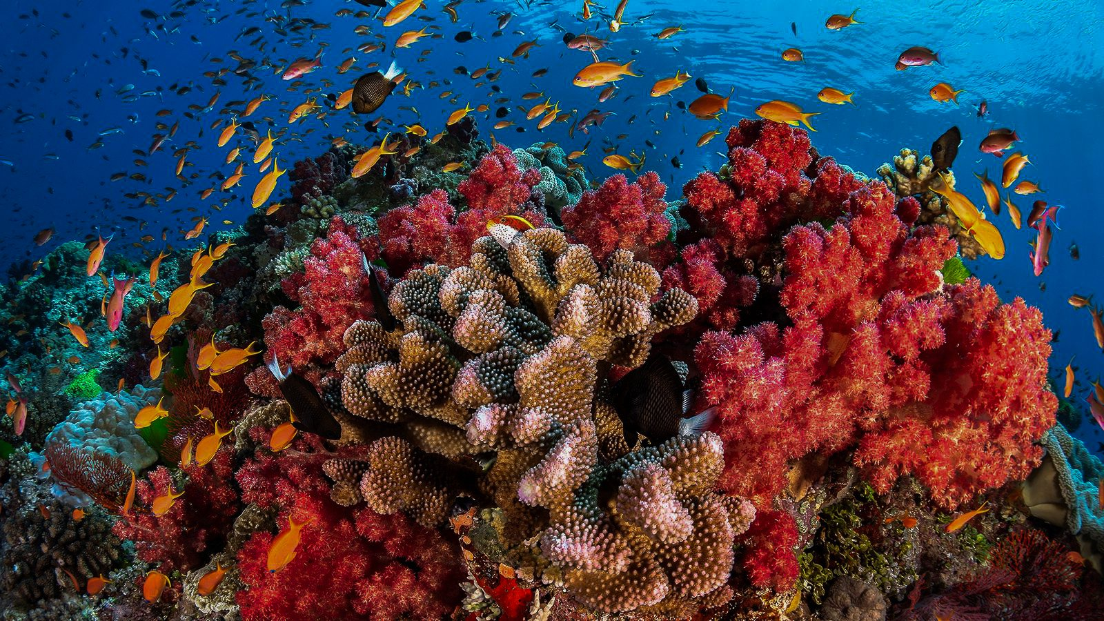 Protecting Coral